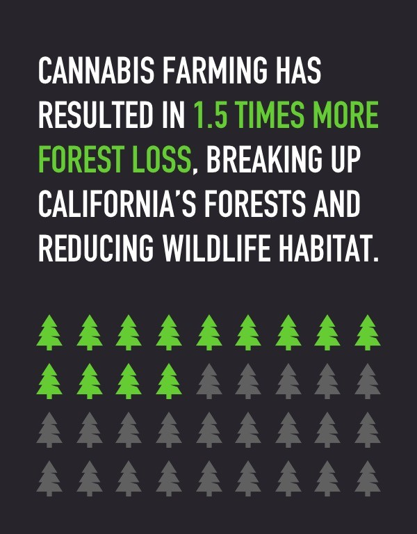 Cannabis farming has resulted in forest loss